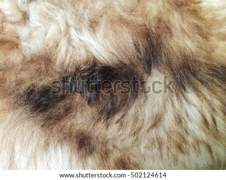 Dog fur closeup. red, yellow, brown, white color.