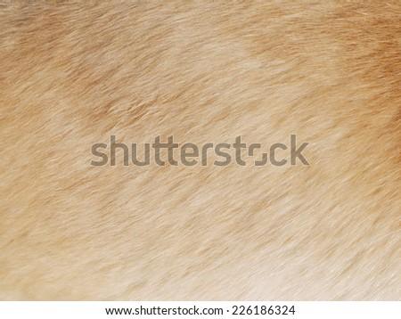 Dog fur textures - stock photo