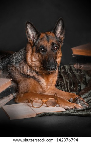 dog,  German Shepherd, reading  book, studying, learning, school, college, exam session - stock photo