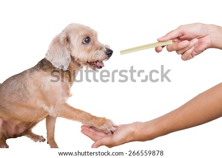 dog getting a snackbar ,isolated on white background