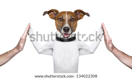 dog giving high five on both sides with male hands - stock photo