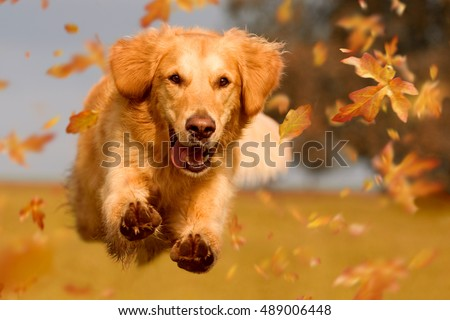 Dog Stock Images Royalty Free Images Amp Vectors Shutterstock