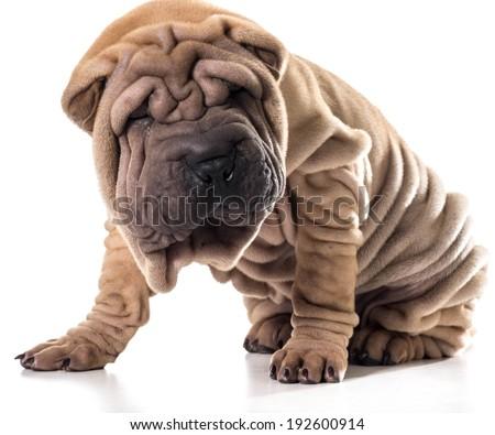 dog hair close up of texture - stock photo
