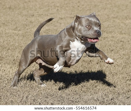 Dog happy and jumping while playing in a field