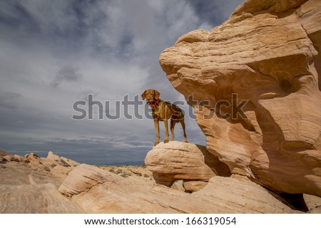 dog hiking in the mountains standing on a red rock - stock photo