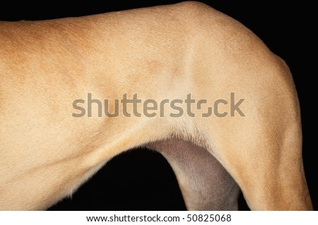 Dog, hindquarters, detail - stock photo