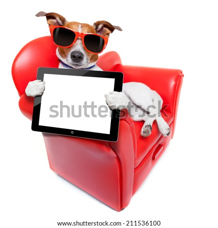 dog holding a blank and empty tablet pc computer  on a red fancy funny sofa , resting and relaxing - stock photo