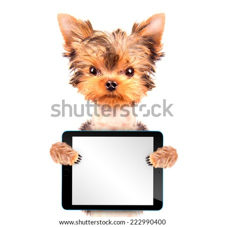 dog holding a  blank tablet pc on paw - stock photo