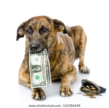 dog holding dollars in its mouth. isolated on white background - stock photo