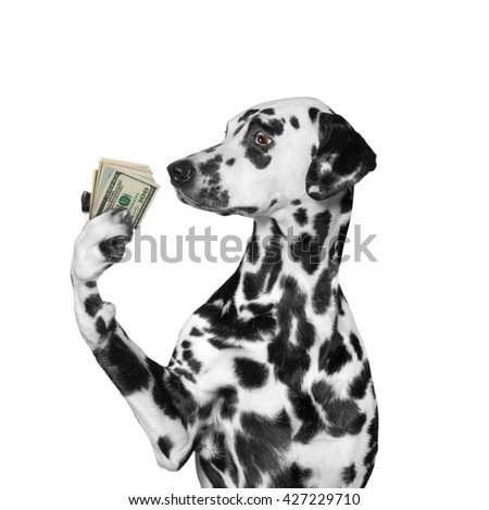 Dog holding in its paws a lot of money -- isolated on white  - stock photo