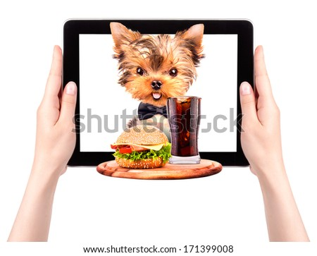 dog holding service tray with food and drink on a tablet screen - stock photo