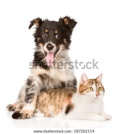 dog hugging cat. isolated on white background - stock photo