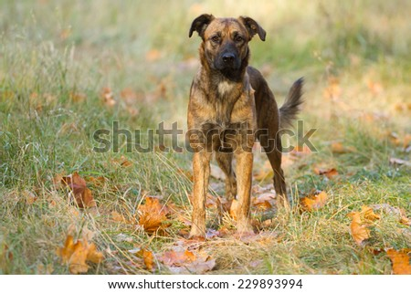 Dog in a beautiful autumn park - stock photo