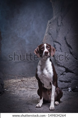 Dog in a cave decorations - stock photo