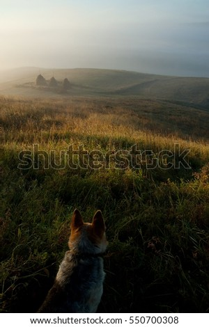Dog in a field. Beautiful sunrise
