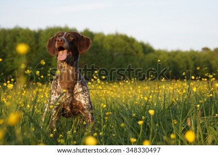 dog in a field of flowers