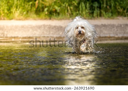 dog in a lake