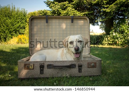 Dog in a suitcase - stock photo
