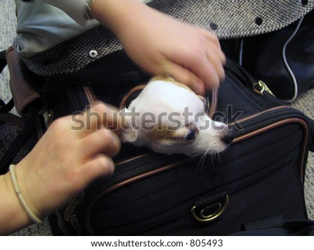Dog In Airplane Carrier - stock photo