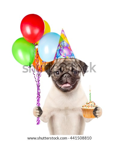 Dog in birthday hat  holding balloons and cake. isolated on white background.