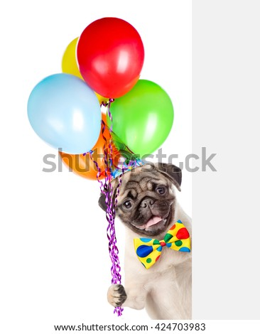 Dog in birthday hat holding balloons peeking from behind empty board. isolated on white background