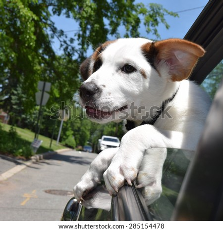 Dog in car with head out of window - stock photo