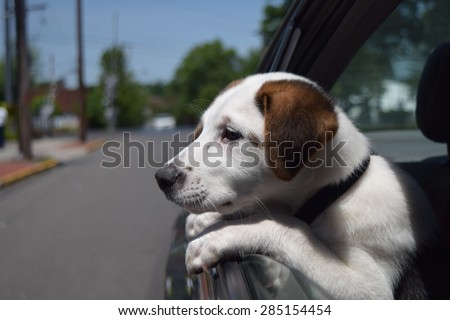 Dog in car with head out of window sad  - stock photo