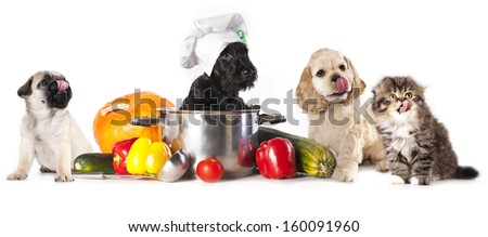 dog in chef's hat  - stock photo