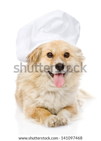 Dog in chef's hat looking at camera. isolated on white background - stock photo