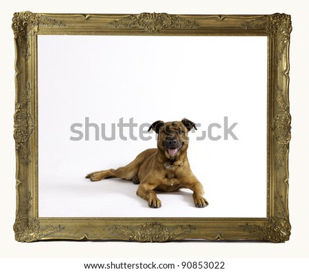 dog in frame - stock photo