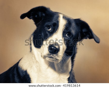 dog in front of a grunge background - stock photo