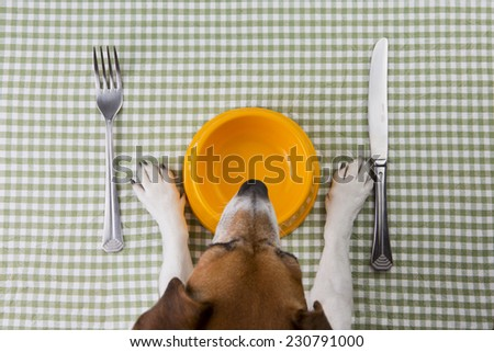 Dog in front of an empty bowl. Tasty food for dogs. School of good manners - stock photo