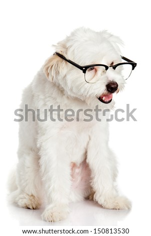 dog in glasses isolated on white background