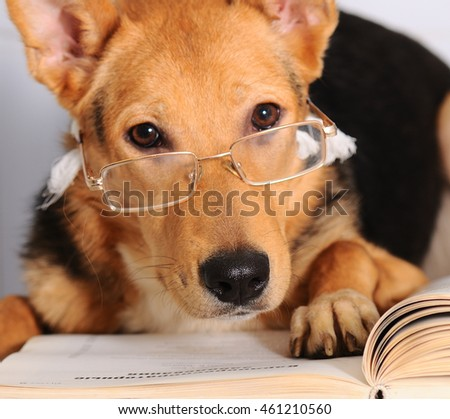 Dog in glasses read book