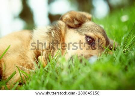 Dog in grass. Dog close up. Dog in nature - stock photo