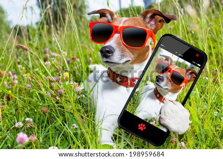 dog in grass taking a selfie looking so cool - stock photo