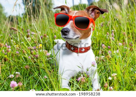 dog in green grass  looking so cool - stock photo