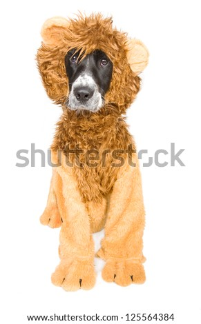 Dog in lion's clothes - stock photo