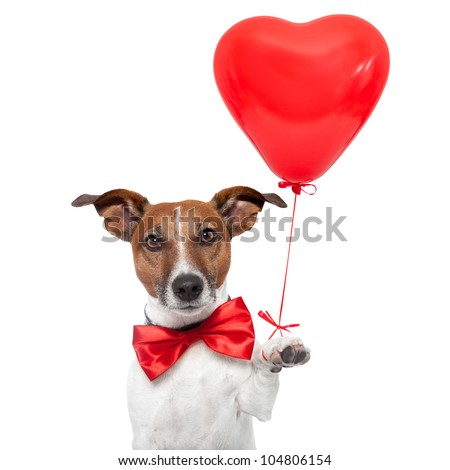 dog in love with a red heart  balloon - stock photo