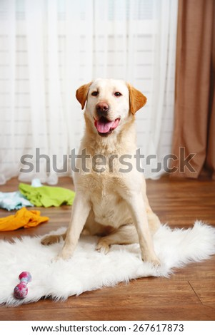 Dog in messy room