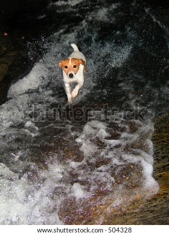 Dog In Mountain Stream - stock photo