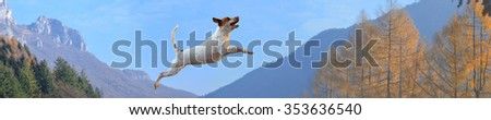 dog in mountains with blue skies - stock photo