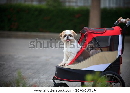 Dog in park - stock photo