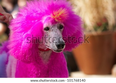 Dog in Pink - stock photo
