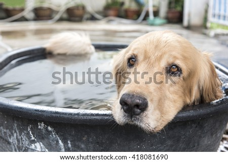 dog in pool at summer, shallow focus - stock photo