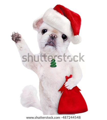 Dog in red Christmas hat. Isolated on white.