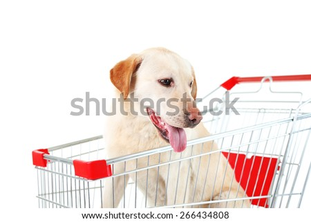 Dog in shopping cart isolated on white - stock photo