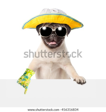 Dog in sunglasses and hat peeking and points on empty banner. isolated on white background