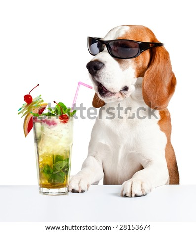 dog in sunglasses with  Mojito , isolated on white