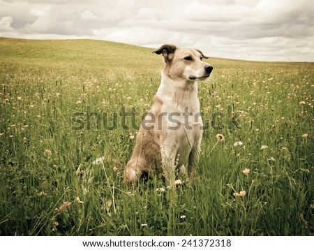 dog in the dandelion meadow  - stock photo